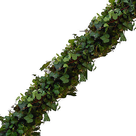Garland, Green Ivy (Choose 10, 25 or 75 ft.)