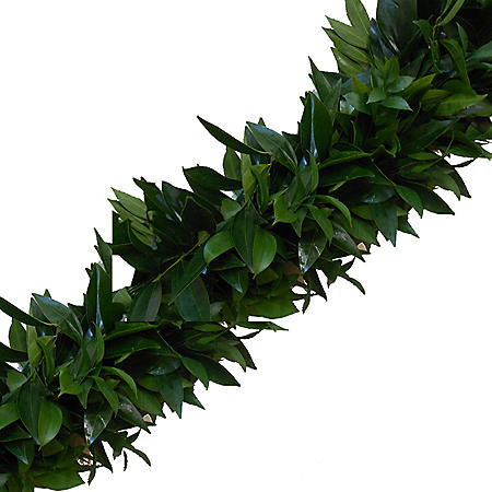 Garland, Cocculus and Italian Ruscus (Choose 10, 25 or 75 ft.)