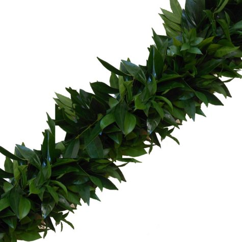 Garland - Cocculus and Italian Ruscus (Choose 10, 25 or 75 ft.)