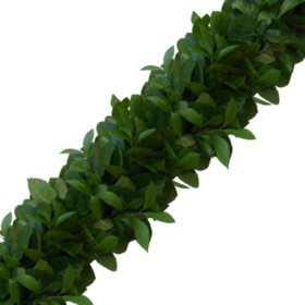 Garland - Israeli Ruscus and Salal (Choose 10, 25 or 75 ft.)