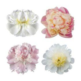 Grower's Choice Alaskan Peony Combo, White and Blush (50 stems)
