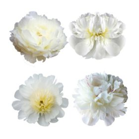 Grower's Choice Petite Alaskan Peonies, White (200 stems)