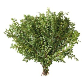 Green Huckleberry Evergreen Floral Filler (Choose 10 or 20 bunches)
