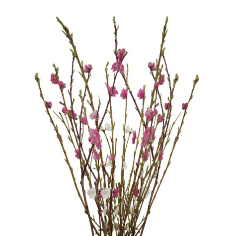 Grower's Choice Blooming Branches (40 stems)