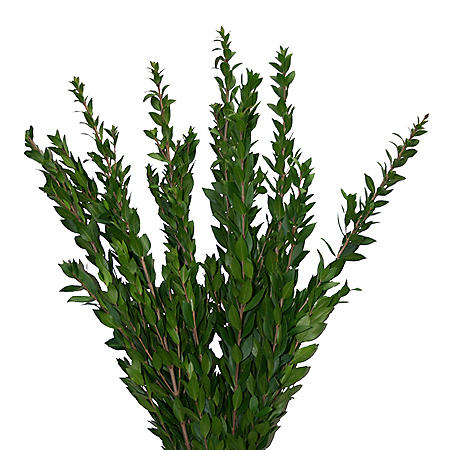 Myrtle Greenery (100 stems)