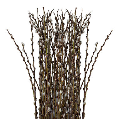 what-is-a-pussy-willow