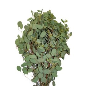 seeded eucalyptus greenery 40 stems - Christmas Greenery Wholesale