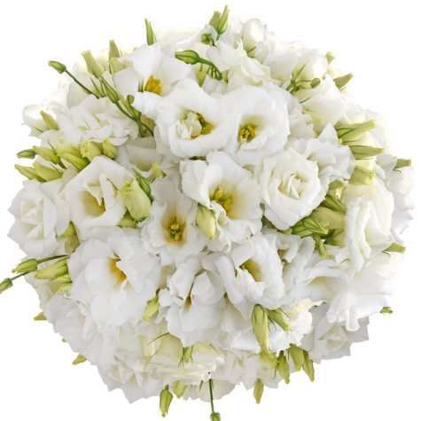 Lisianthus, White (80 stems)