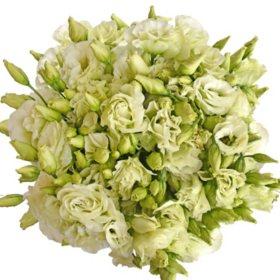 Lisianthus, Green (80 stems)