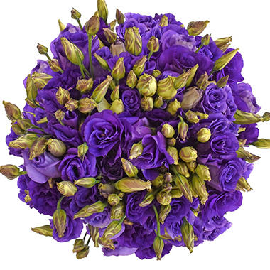 Lisianthus purple 80 stems sams club lisianthus purple 80 stems mightylinksfo