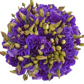 Lisianthus, Purple (80 stems)