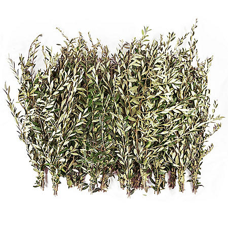 Fresh Olive Branches (200 stems)