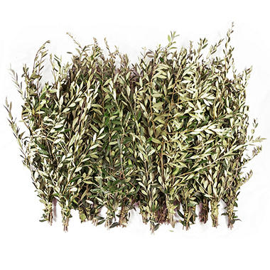 Fresh Olive Branches (200 stems) - Sam\'s Club