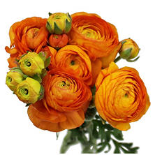 Ranunculous, Orange (60 Stems)