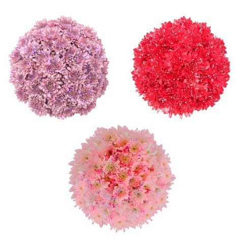 Valentines Cupcake Pompons, Painted (60 Stems)