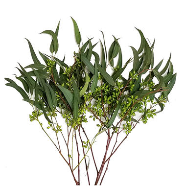 Eucalyptus Willow Seeded 40 Stems
