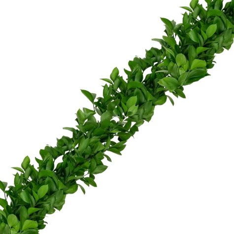 Garland, Israeli Ruscus (10 or 25 ft.)