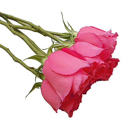 Do-It-Yourself Wired Roses, Hot Pink (50 or 100 stems)