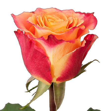 Roses, Silantoi (50 stems)