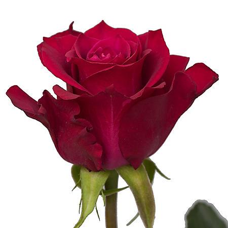 Roses, Merlot (50 or 100 stems)