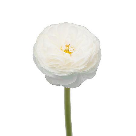 Ranunculus, White (choose stem count)