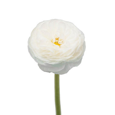 Ranunculus, White (choose stem count)