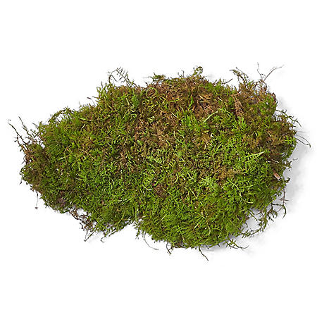 Sheet Moss (10-lb. box)