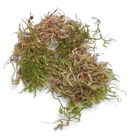 Forest Moss (10 lb. box)