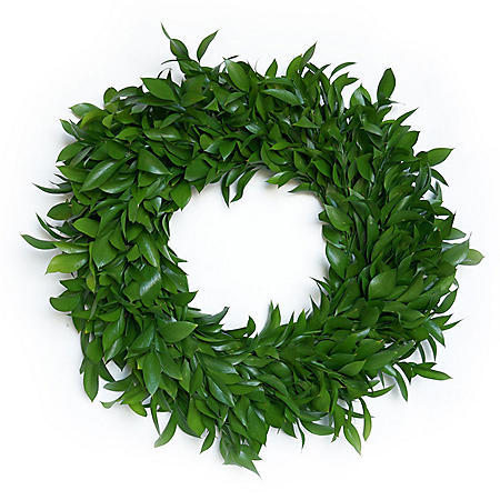 Fresh Ruscus Wreath (24 in.)