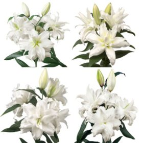 Bulk lilies sams club rose lily white 30 or 50 stems mightylinksfo