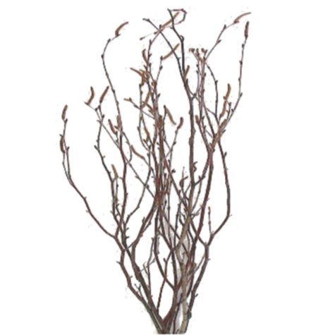 Natural Birch (15 bunches)