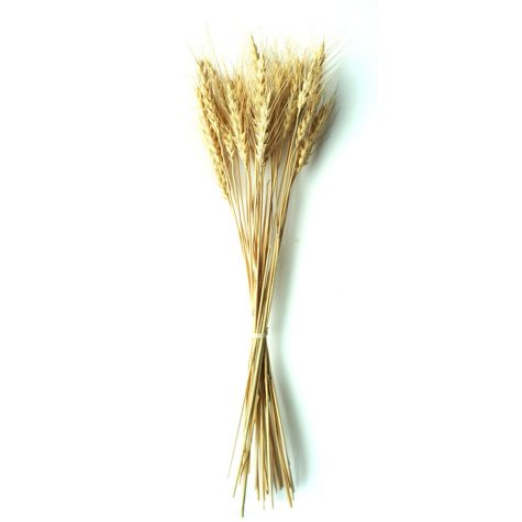 Wheat (10 Bunches)