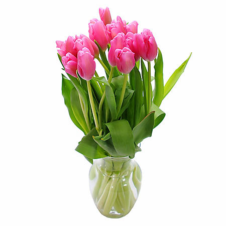 Fresh Cut Tulips, Pink (Choose 40 or 90 stems)