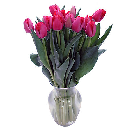 Fresh Cut Tulips, Red (choose 40 or 90 stems)