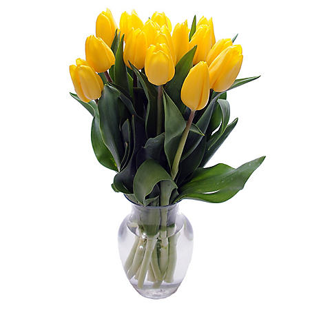 Fresh Cut Tulips, Yellow (choose 40 or 90 stems)