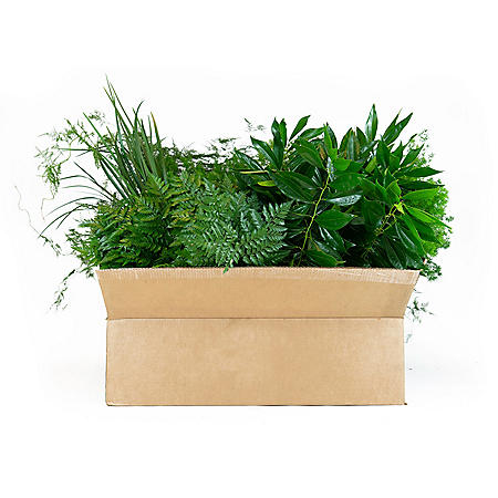 Florida Greens Assorted Mix (10 bunches)