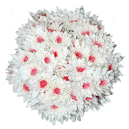 Clever Painted Poms (22 bunches)