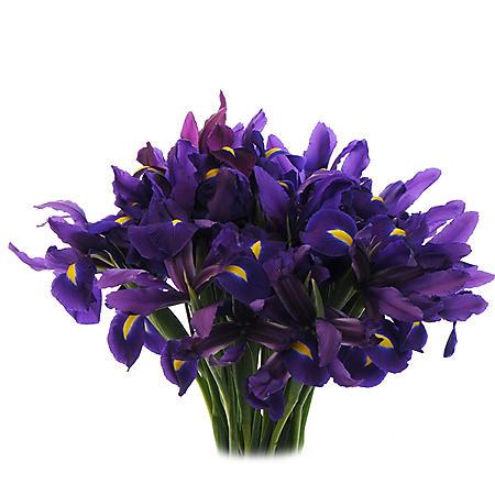 Purple Iris (Choose 50 or 90 stems)