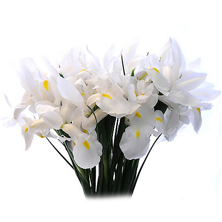 White Iris (Choose 50 or 90 stems)