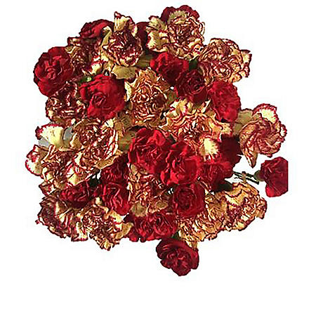 Duet Carnations (5 Bunches)
