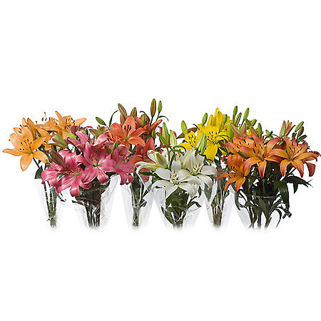 LA Hybrid Lily, Assorted (choose 40 or 90 stems)