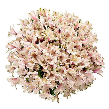 Alstroemeria, White (Choose 45 or 90 stems)