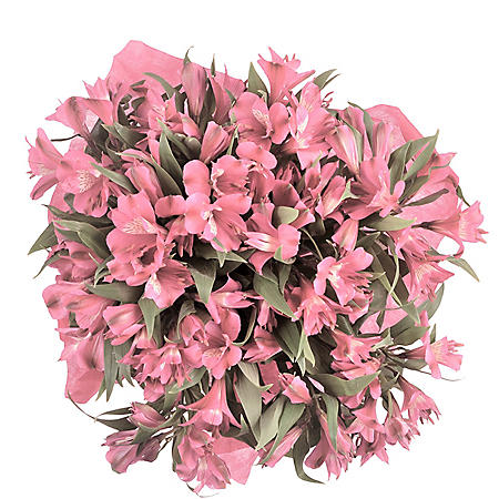 Alstroemeria, Pink (Choose 45 or 90 stems)