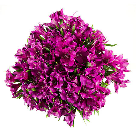 Alstroemeria, Purple (Choose 45 or 90 stems)