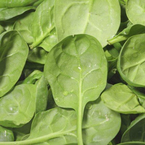 Baby Leaf Spinach - 1.5 lb.