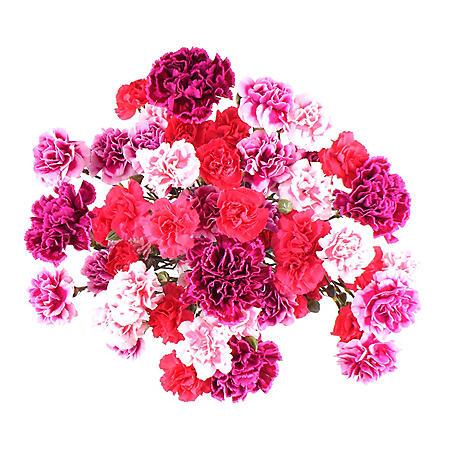 Carnation Medley (20 stems)