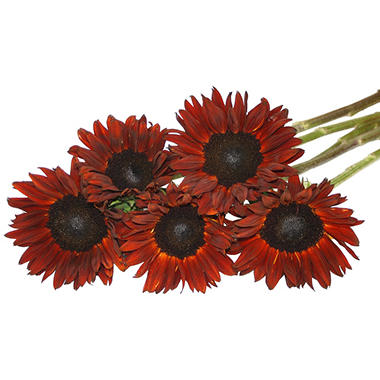 Natural Red Sunflowers (40 Stems)