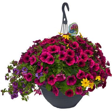 Hanging Basket, 11 inch