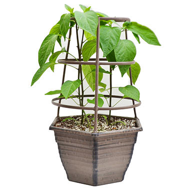 Vegetable Planter with Cage