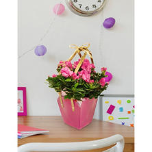 Colorful Azalea Bloom Gift Basket